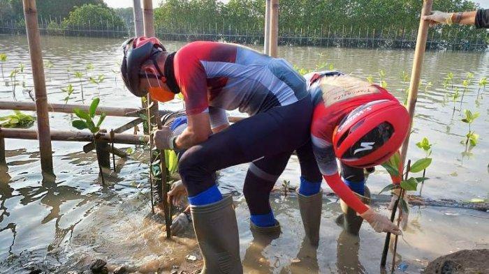 Peringatan Hari Lahir Ke-120 Bung Karno, Ganjar Tanam Mangrove di Daerah yang Terancam Tenggelam