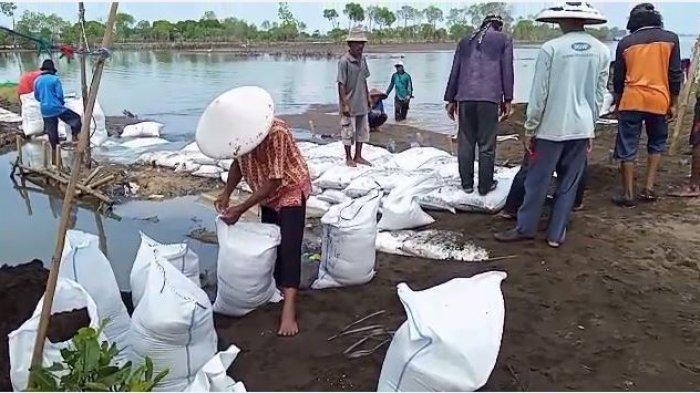 Gunakan Karung Berisi Pasir, Warga Simonet Gotong-royong Buat Jalan Antisipasi Banjir Rob