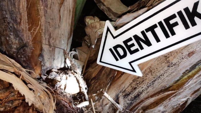 Warga Temukan Granat Nanas di Kebumen, Diduga Bekas Peninggalan Perang Dunia