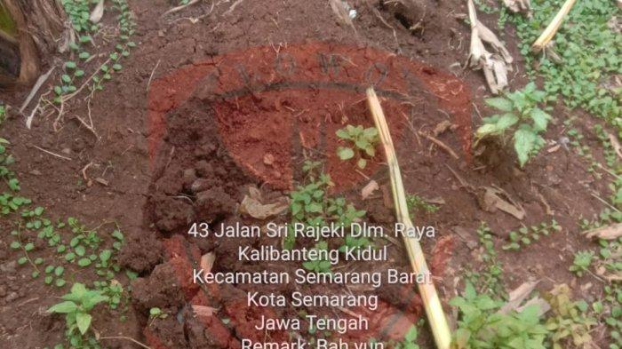 Kain Kafan dan Gundukan Tanah Merah di Kebun Kosong Bikin Geger Warga Satu RW di Semarang