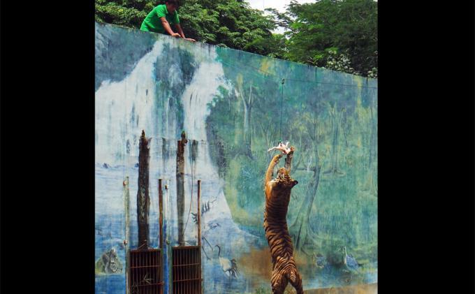 Anak di Bawah 12 Tahun Dilarang Masuk, Kebun Binatang Taru Jurug Solo Sepi Pengunjung
