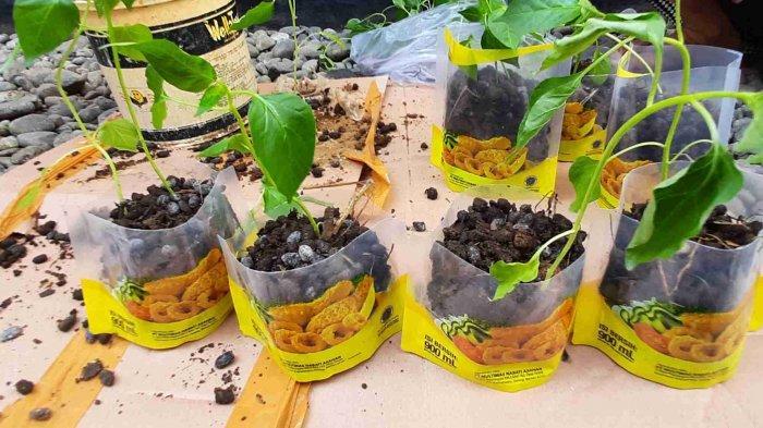 Mahasiswa KKN Unnes Menyulap Limbah Plastik Minyak Goreng Menjadi Pot Tanaman