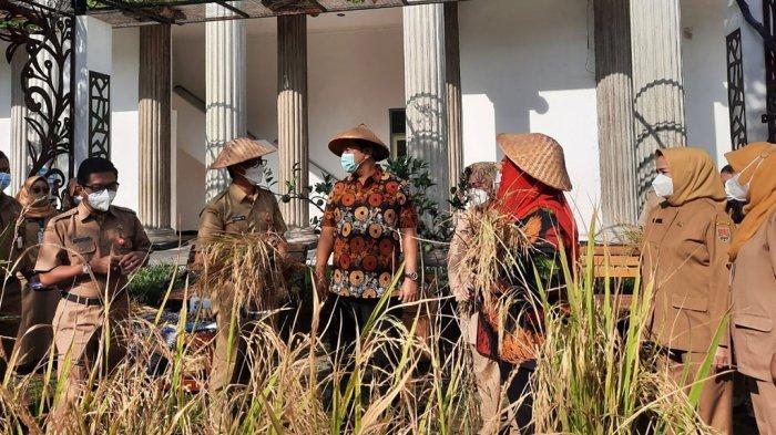 Hendrar Prihadi Panen Padi di Halaman Balaikota Semarang? Gak Harus di Sawah