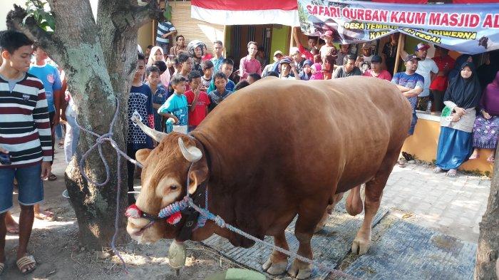 Harus Tahu, Sembelih Hewan Kurban Betina Produktif Bisa Dipenjara 3 Tahun