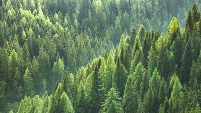 Aristo Tersesat di Hutan saat Kabur Dikeroyok Gerombolan Pemuda Mabuk, Ditemukan Lemah Kelaparan