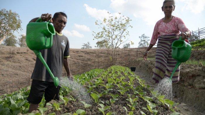 Rilis Terbaru UNDP Indonesia Soal Indeks Kemiskinan Multidimensi