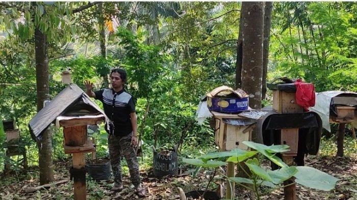 Permintaan Madu Meningkat, Peternak Lebah Mendulang Untung di Tengah Pandemi
