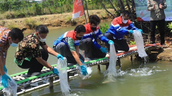 Dari Susur Sungai hingga Kampoeng Kepiting, Inilah Wisata Terpadu Kutawaru Binaan Pertamina Cilacap