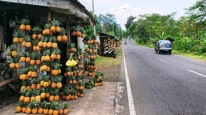 Jajaran lapak penjual nanas madu yang ada di Jalan Pemalang - Purbalinga, tepatnya di Kecamatan Belik Kabupaten Pemalang, Jumat (30/4/2021).