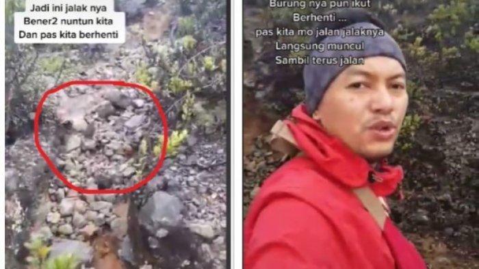 Viral Pendaki Tersesat di Gunung Lawu Dituntun Burung Jalak Hingga ke Puncak