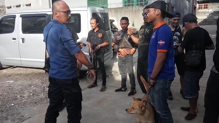 11 Anjing yang Gerogoti Jasad Majikannya di Depok Dievakuasi, Ini Alasannya