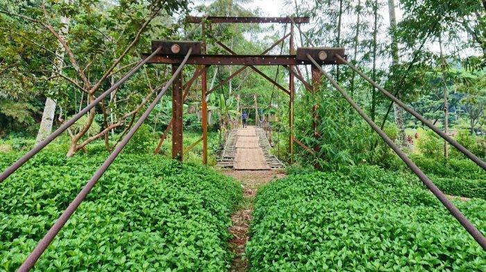 Jembatan penghubung dua komplek penjarayang ada di tengah perbatasan Kecamatan Bawang Batang, dan Plantungan Kendal. Dua komplek penjara itu pernah digunakan untuk mengisolasi anggota Gerwani,pasca pecahnya tragedi G30S 1965 hingga 1979, Kamis (7/10/2021).