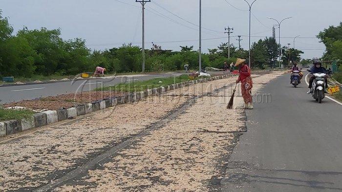 Warga Pesisir di Tegal Ramai-ramai Jemur Udang Rebon di Jalan Lingkar Utara