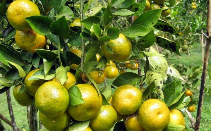 9 Makanan Mengandung Vitamin C Tinggi, Bantu Pembentukan Kolagen Agar Awet Muda
