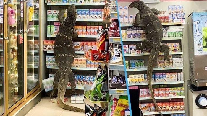 Biawak masuk mini market di Thailand. Sebuah screenshot video memperlihatkan kadal besar di dalam toko 7-Eleven di Nakhon Pathom, Thailand. ViralPress via Daily Mirror