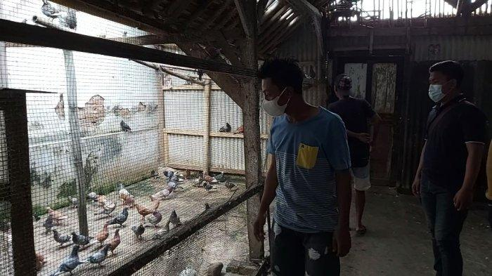 Joned saat melihat kandang burung miliknya yang berada di wilayah Wonopringgo, Kecamatan Wonopringgo, Kabupaten Pekalongan, Jawa Tengah