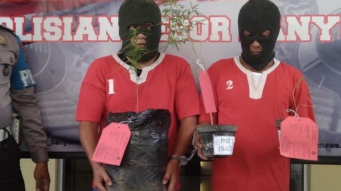 Tanam Ganja di Pekarangan Rumah, Dua Pria Banyumas Ditangkap Polisi