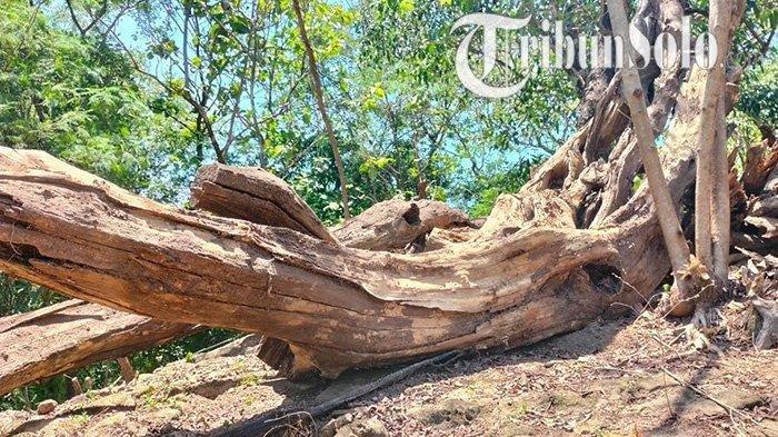 Cerita Mistis, Ambil Secuil Kayu dan Batu di Goa Mangkubumi Sragen Pengambil Bisa Sakit