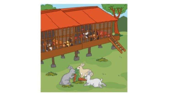 Kunci Jawaban Tema 6 Kelas 2 Halaman 47 48 dan 49 Membaca Teks Tentang Hewan Ayam