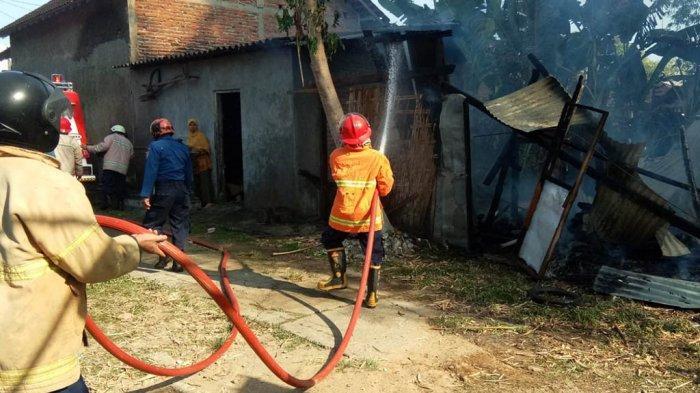 Kandang Sapi Warga Kroyo Sragen Terbakar, Gara-gara Orang Bakar Sampah
