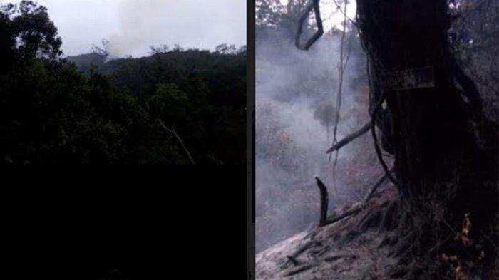 Kebakaran Melanda Hutan di Kawasan Gunung Slamet Pemalang