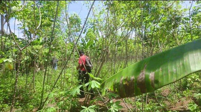 Polisi Temukan Tabung Elpiji di Kebun Singkong Belakang Indomaret Gunungpati Semarang