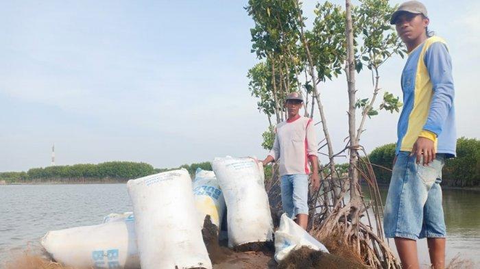 Irfani Masih Wajib Bayar Pajak Meski Ditelan Abrasi - Duka Petani Rumput Laut di Brebes