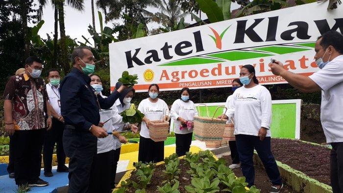 Juara Nasional Pekarangan Pangan Lestari, KWT Pengalusan Purbalingga Bangun Kawasan Agroeduwisata