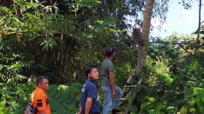 Warga Terganggu Monyet Birahi Kejar Perempuan Desa di Karanganyar