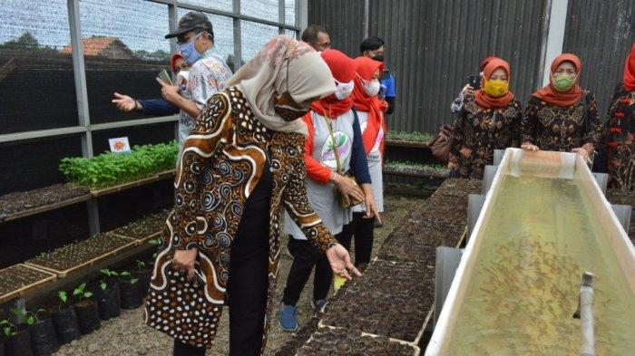 Jaga Ketahanan Pangan di Banyumas, Erna Husein Pantau Pekarangan Pangan di Sokaraja