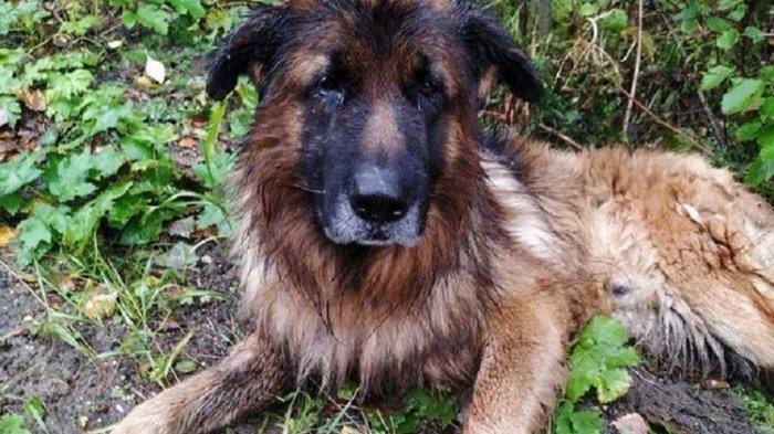 Dikubur Hidup-Hidup oleh Pemiliknya, Anjing Ini Berhasil Keluar hingga Ditolong Pengguna Jalan