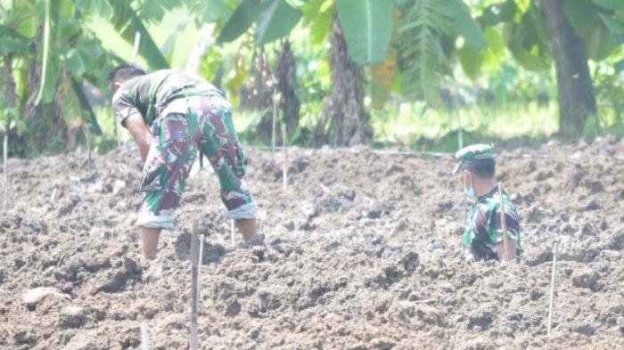Dukung Ketahanan Pangan, Kodim 0716/Demak Siapkan Lahan Pertanian dan Perkebunan