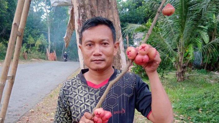 Cerita Edi Sulton Kembangkan Jambu Air Khas Jepara