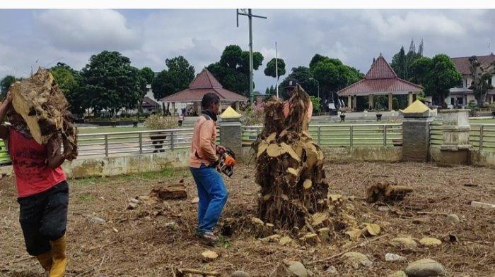 Kondisi Beringin di alun alun Banjarnegara saat ditebang