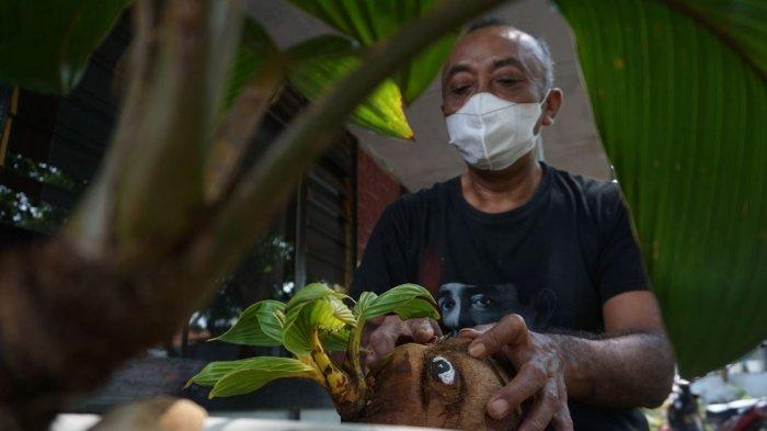 Totok Hariyanto saat mengukir tempurung pada bonsai kelapa di pelataran rumahnya, Desa Kemiri Barat, Kecamatan Subah, Batang, Sabtu (31/7/2021).