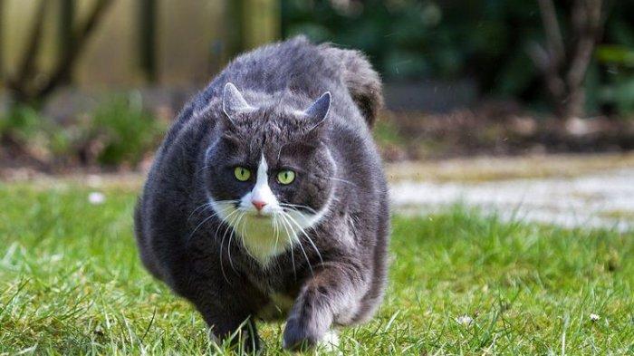 15 Orang Positif Covid-19 Setelah Hadiri Pesta Ulang Tahun Seekor Kucing