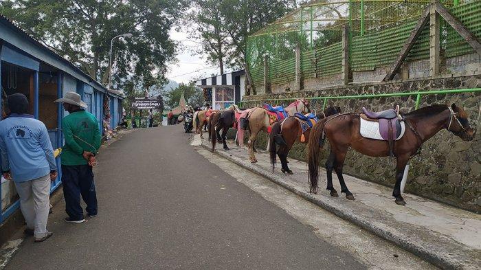Penyewa Kuda Grojogan Sewu Ketiban Rejeki Nomplok Wisatawan Libur Lebaran