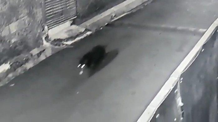 Viral Babi Ngepet Hitam Dikejar Warga Mendadak Hilang Terekam CCTV, Ini Faktanya