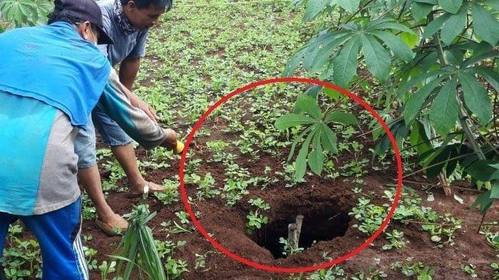Mujio Kaget Istrinya Mendadak Hilang Ditelan Bumi Saat di Ladang, Begini Akhir Nasibnya