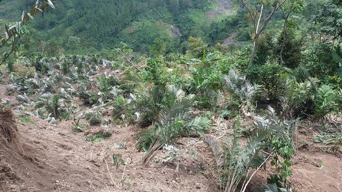 Pergerakan Tanah di Banjarnegara Meluas, 15 Hektar Lahan Warga Dan Bengkok Desa Ambles