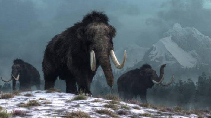 Mammoth Terakhir di Muka Bumi Mati di Pulau Kecil Bernama Wrangel
