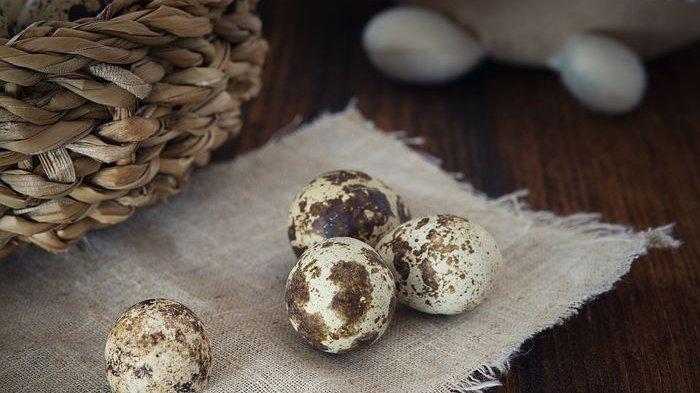 Telur Puyuh Bisa Cegah Penyakit Kronis, Namun Tak Dianjurkan Bagi Penderita Kolesterol