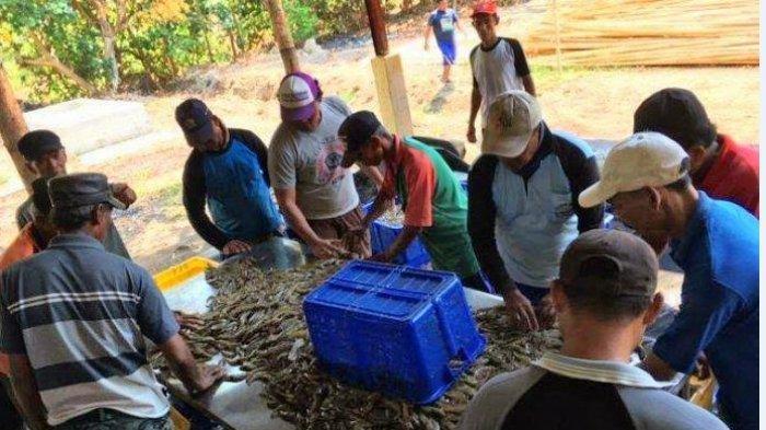 Sejahterakan Masyarakat Pesisir, Pemkab Pemalang Kembangkan Budidaya Udang Vaname