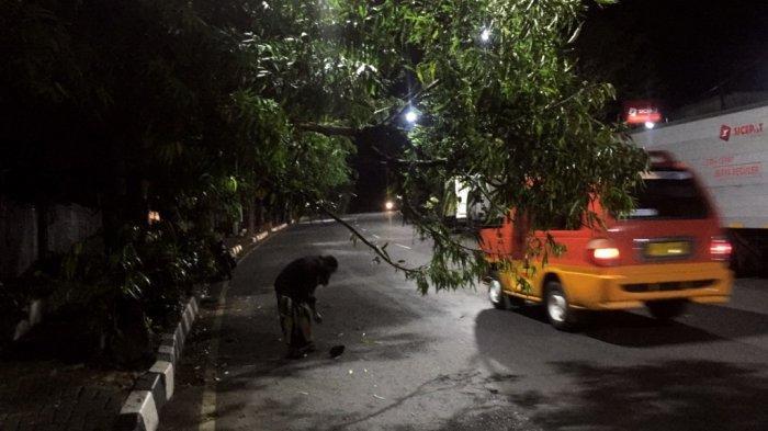 Dahan Pohon Tumbang di Jalan Abdulrahman Saleh Semarang, Sempat Ditabrak Sejumlah Pemotor
