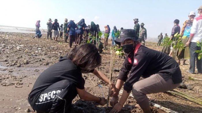 Peduli Lingkungan, Mahasiswa UIN Walisongo Tanam 2 Ribu Bibit Mangrove di Pesisir Pati