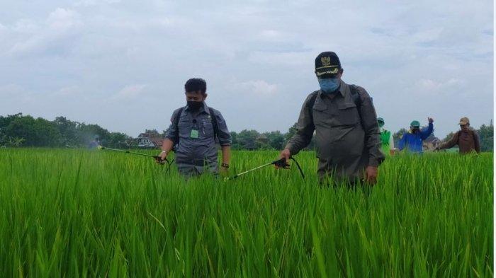 Kementan Perkuat Perekonomian Lewat Gerakan Padat Karya di Kawasan Integrated Farming Karanganyar