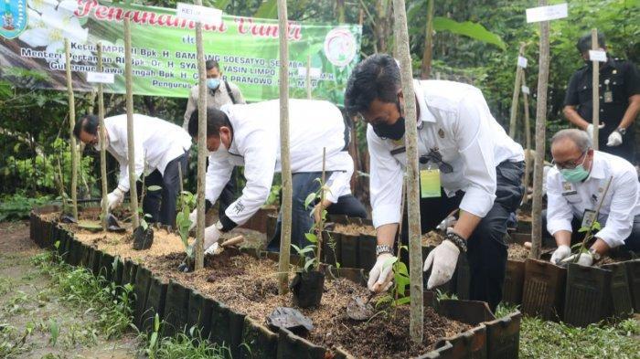 Canangkan Salatiga Kota Vanili, Mentan Syahrul Yasin Limpo Ajak Daerah Kembangkan Tanaman Vanili