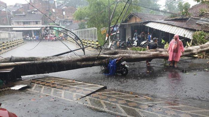 Pohon Akasia Roboh Timpa Pemotor dan Bangunan di Malang, Korban Selamat Meski Terluka