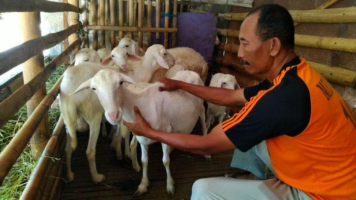 Peternak Mejobo Kudus Siap Menjaga Hibah Kambing Selama Dua Tahun
