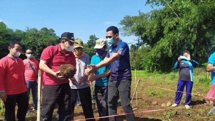 Panen Porang Perdana, Bupati Kabupaten Semarang Dorong Petani Tanam Komoditas Potensi Ekspor